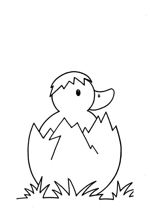 3 4 anni 5 disegni per bambini da colorare for Disegni di squali per bambini