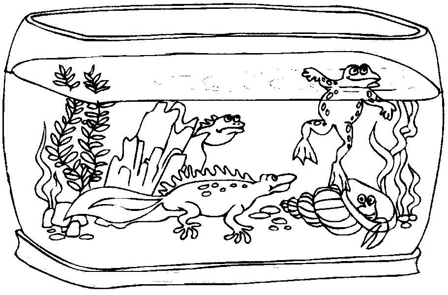 Acquari pesciolini 2 disegni per bambini da colorare for Immagini pesciolini
