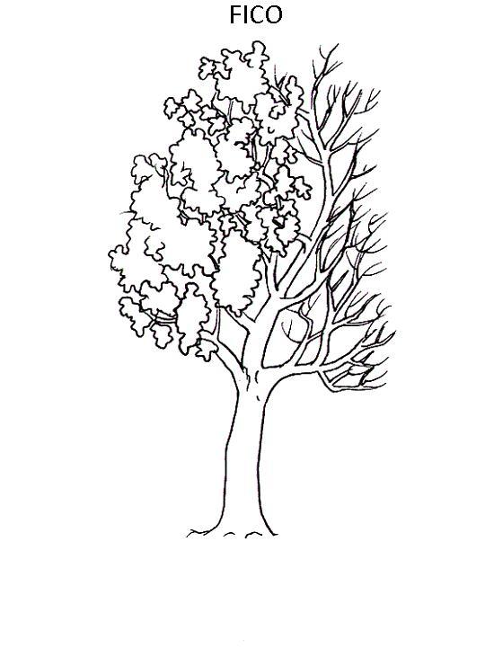 Favoloso Alberi 3, Disegni per bambini da colorare WF13