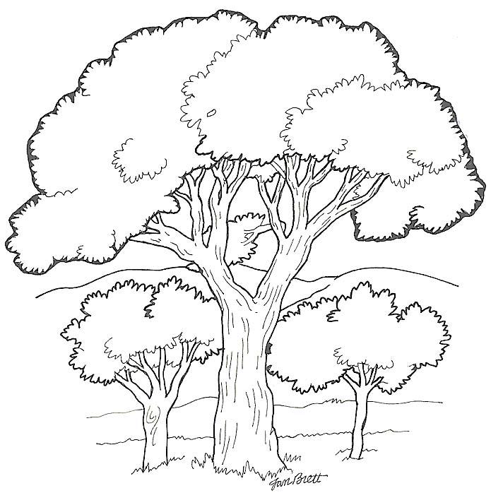 Alberi 2 disegni per bambini da colorare for Foto di alberi da colorare
