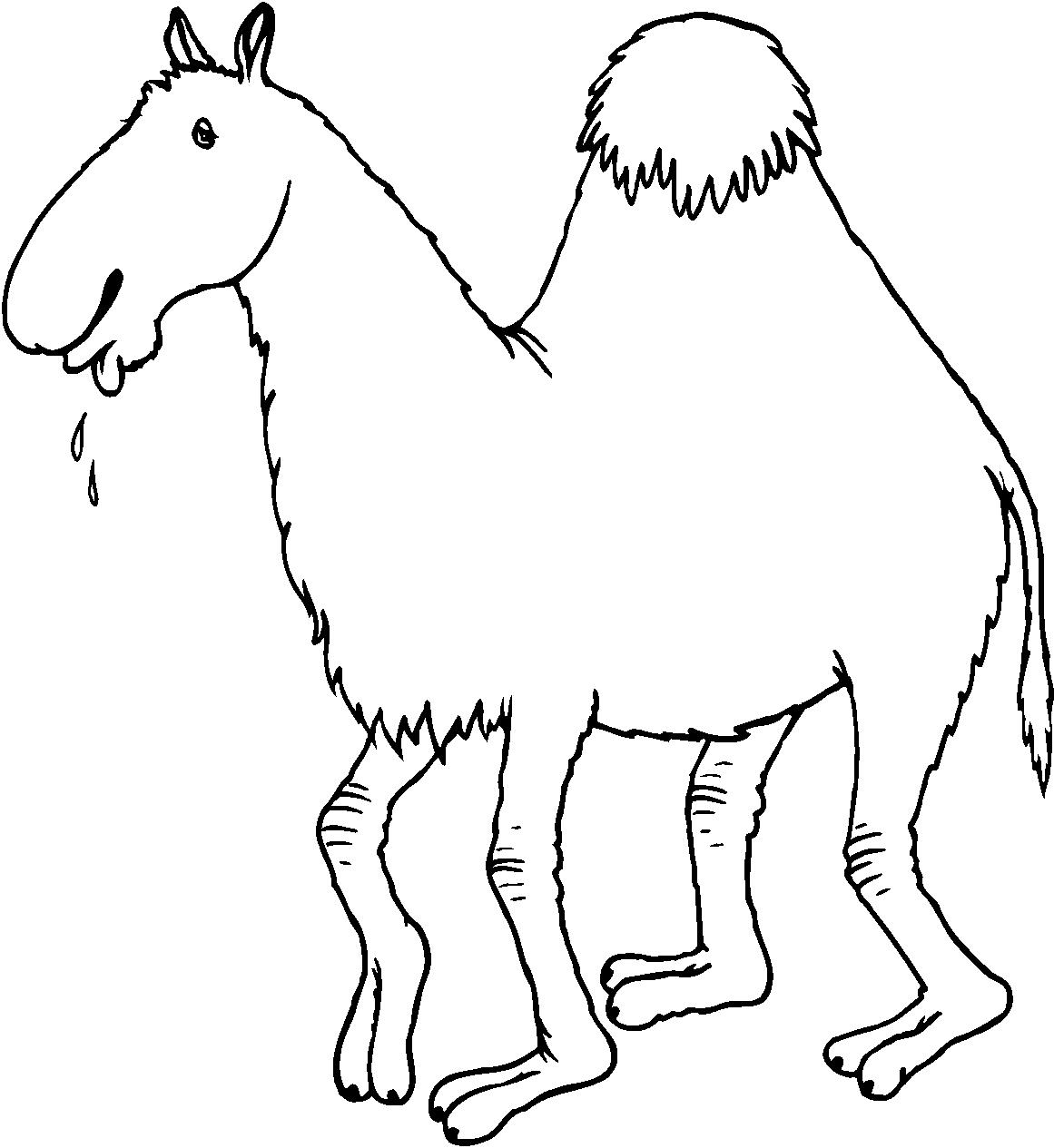 Disegni animali da stampare e colorare imagixs picture to - Animali immagini da colorare pagine da colorare ...