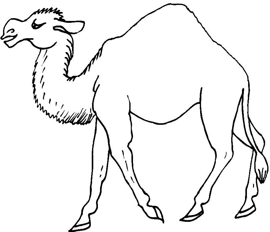 Animali Del Deserto 3 Disegni Per Bambini Da Colorare