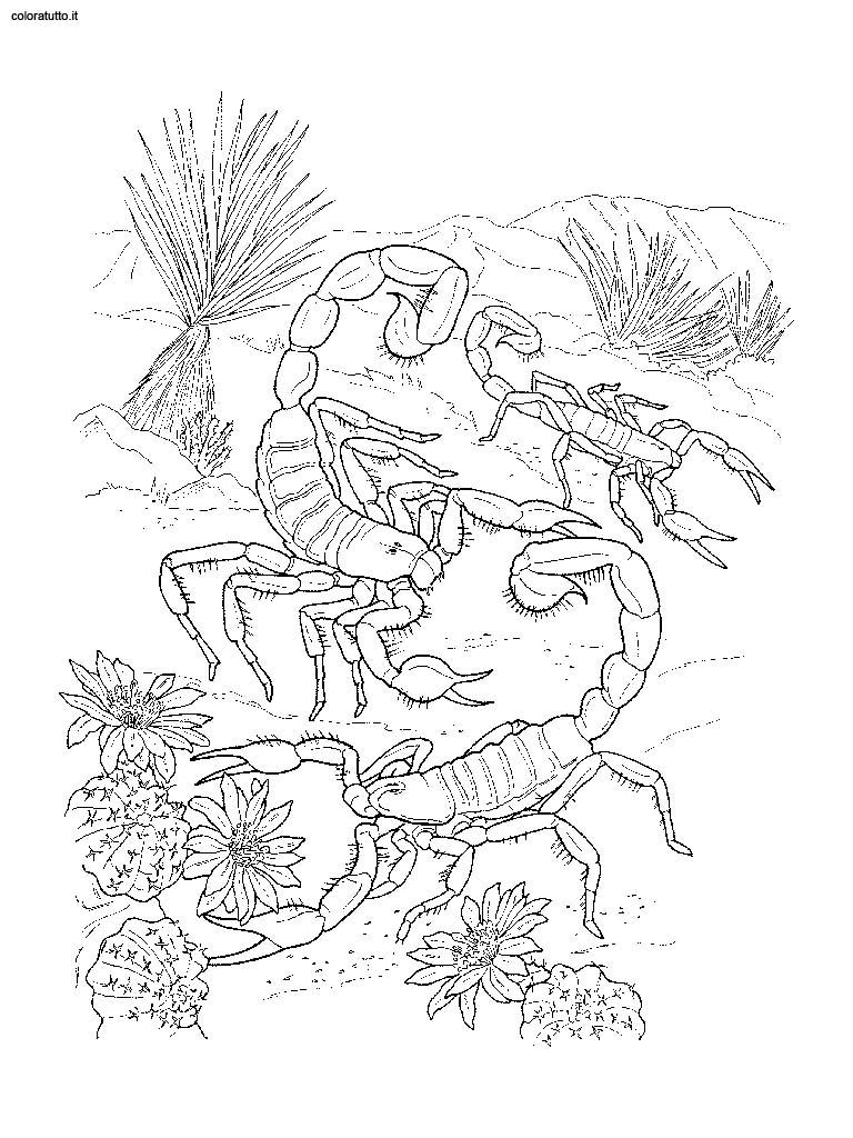 animali del deserto 6 disegni per bambini da colorare