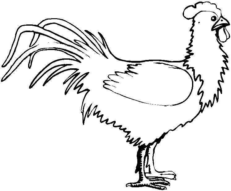 Animali fattoria 6 disegni per bambini da colorare for Fattoria immagini da colorare
