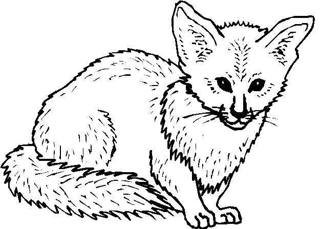 Animali foresta 19 disegni per bambini da colorare for Immagini di cani da colorare