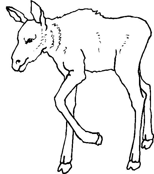 Animali foresta 22 disegni per bambini da colorare for Disegni da colorare animali della foresta