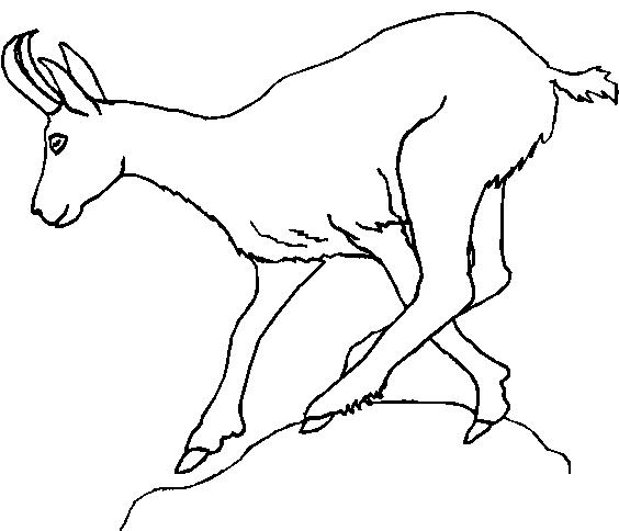 Disegni da colorare e stampare di animali veri