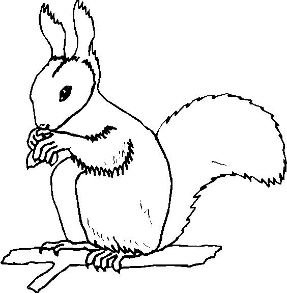 Animali foresta 5 disegni per bambini da colorare for Disegni da stampare e colorare di cani