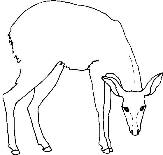 Animali foresta disegni per bambini da colorare for Disegni da colorare animali della foresta
