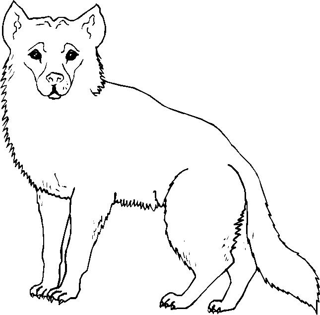 Animali foresta 7 disegni per bambini da colorare for Disegni da colorare animali della foresta