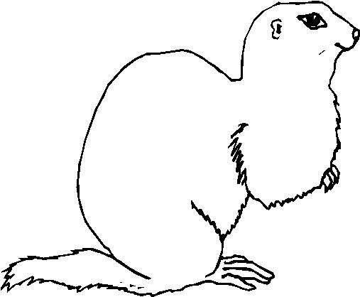 Animali foresta 8 disegni per bambini da colorare for Disegni da colorare animali della foresta