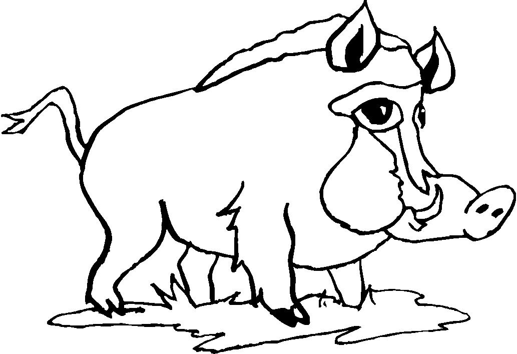 animali foresta 8 disegni per bambini da colorare