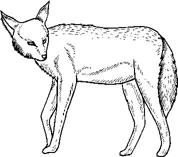 Animali foresta 13 disegni per bambini da colorare for Disegni da colorare animali della foresta