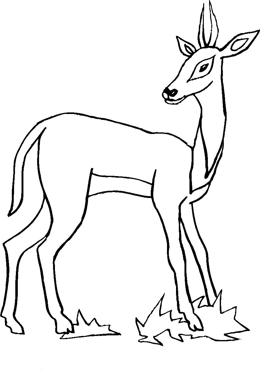 Animali della foresta da colorare on line l 39 idea for Disegni da colorare animali della foresta