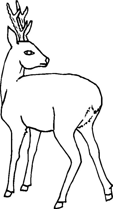 Animali foresta 19 disegni per bambini da colorare for Disegni da colorare animali della foresta