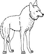 Animali foresta 22 disegni per bambini da colorare for Cane da disegnare per bambini