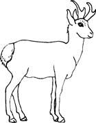 Animali foresta 27 disegni per bambini da colorare for Lepre disegno da colorare