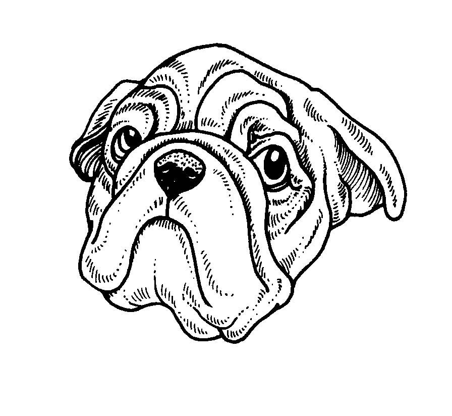 Cani 3 disegni per bambini da colorare - Immagini di animali da stampare gratuitamente ...