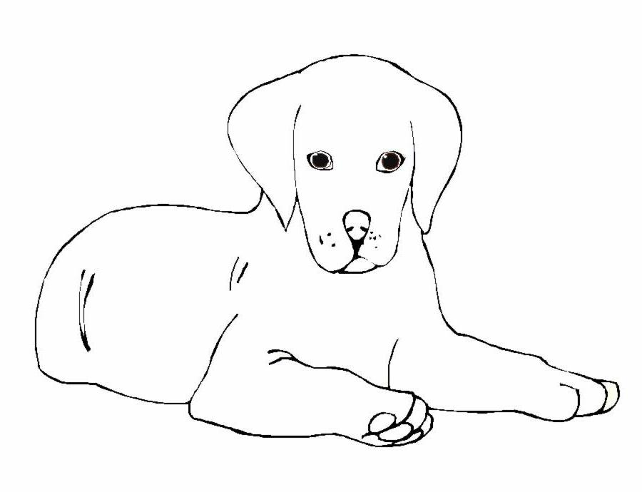 Cani 5 disegni per bambini da colorare for Cane disegno facile
