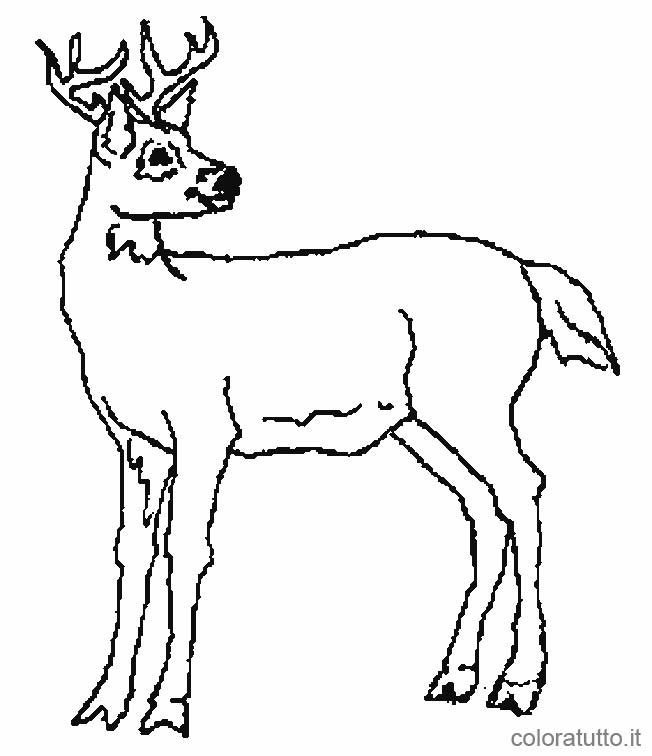 Cervi 2 disegni per bambini da colorare - Dessin de chasse ...