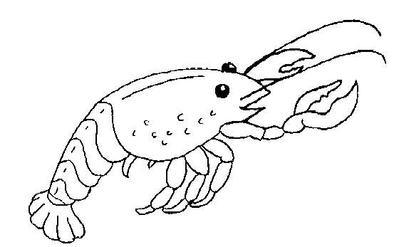 Crostacei disegni per bambini da colorare for Immagini di mare da colorare