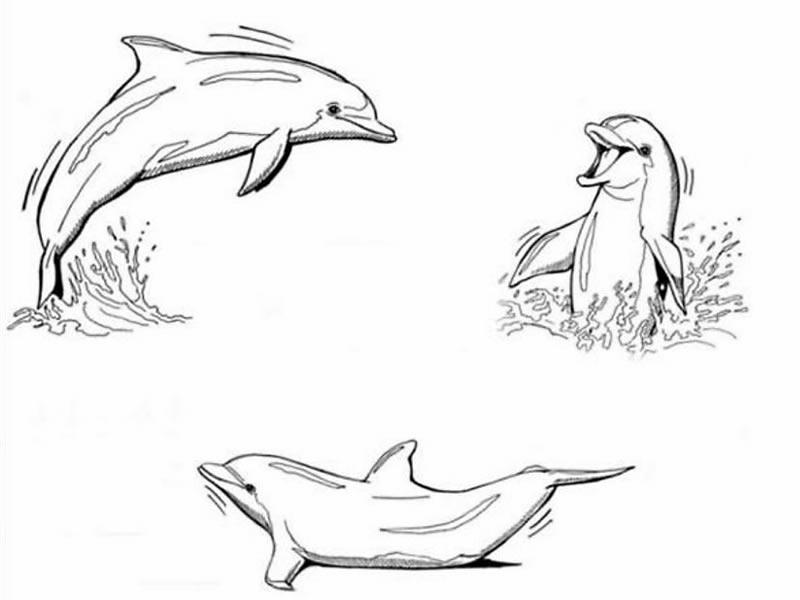 Delfini 7 disegni per bambini da colorare for Delfino disegno da colorare