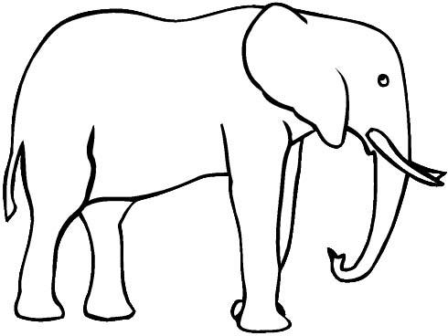 Elefanti 4 disegni per bambini da colorare - Elephant image dessin ...