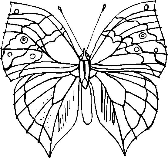 Farfalle 7, Disegni Per Bambini Da Colorare