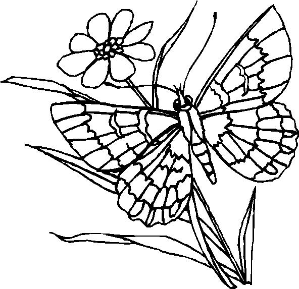 Farfalle 7 disegni per bambini da colorare for Disegni da stampare e colorare fiori