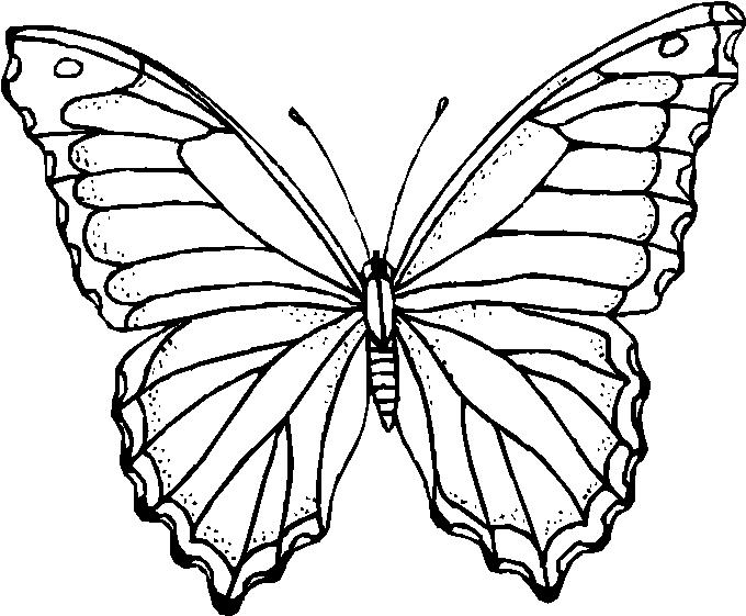 Farfalle 7 Disegni Per Bambini Da Colorare