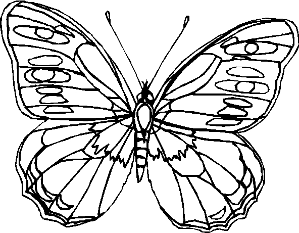 Farfalle 8 Disegni Per Bambini Da Colorare