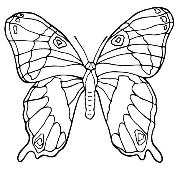 Farfalle disegni per bambini da colorare for Immagini farfalle da ritagliare