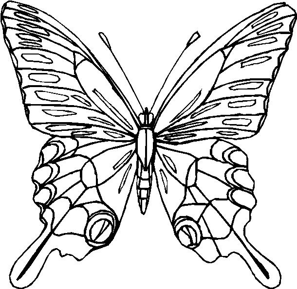 Farfalle 15 Disegni Per Bambini Da Colorare