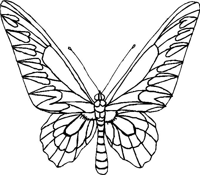 Farfalle 12, Disegni Per Bambini Da Colorare