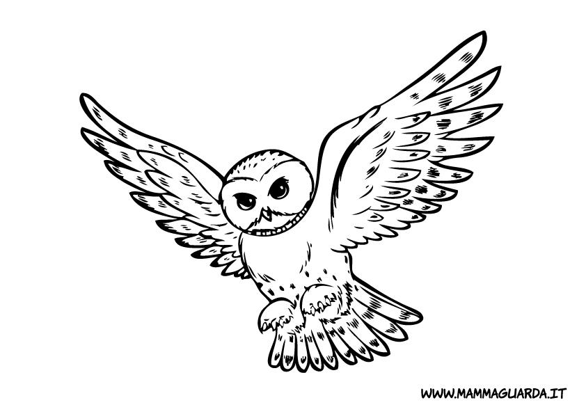 Disegnare un gufo mw19 regardsdefemmes - Animali immagini da colorare pagine da colorare ...