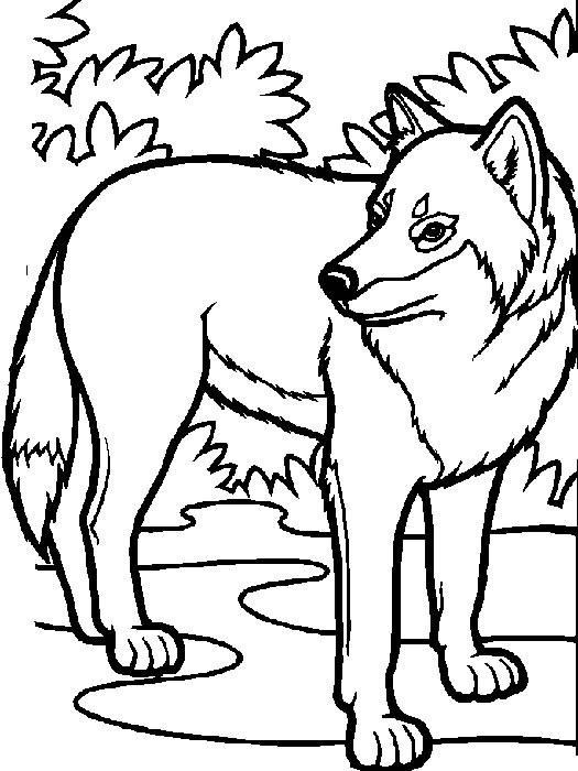 Lupi disegni per bambini da colorare for Disegni di lupi da stampare