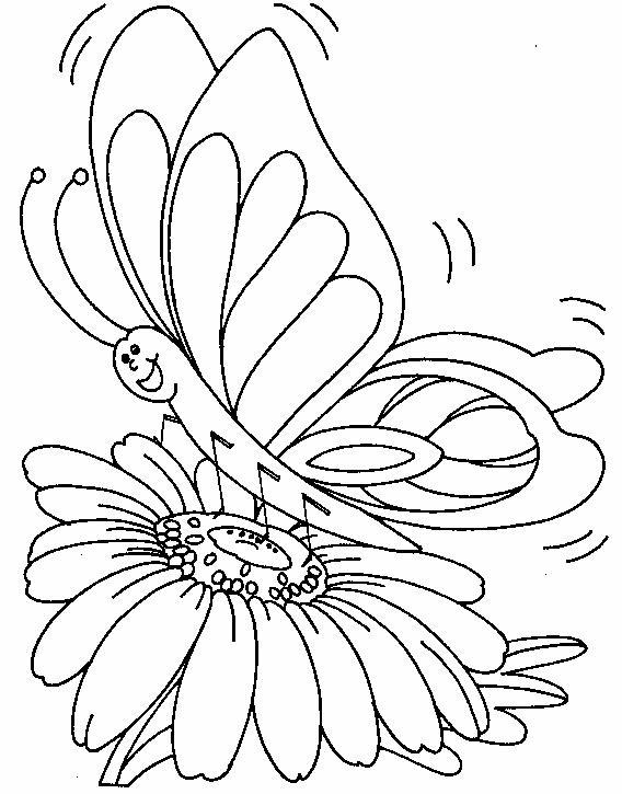 Margherita con farfalla
